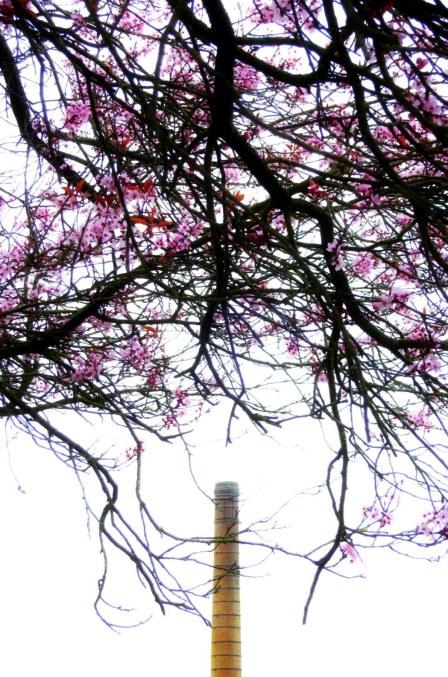 smokestack tree