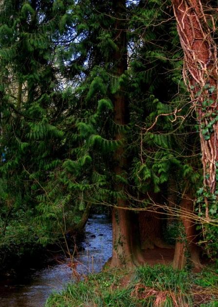 stream evergreens